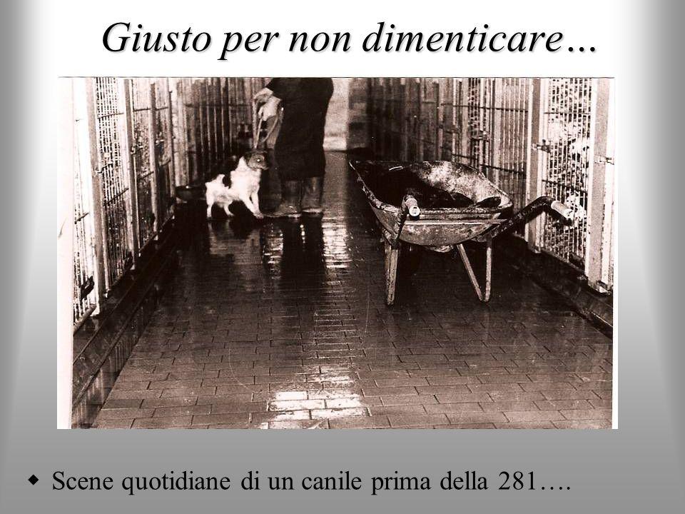 IL SETTORE CANI CON PROBLEMI DI SOCIALIZZAZIONE SECONDARIA Sono i cosiddetti cani problema non pericolosi.