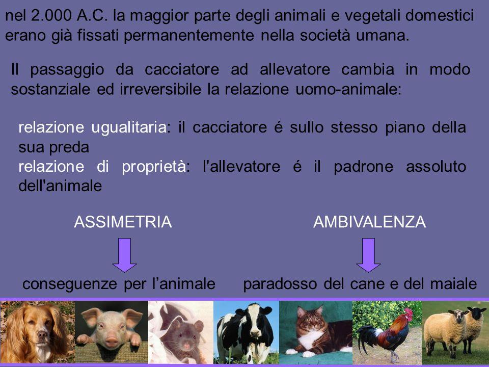 Cane: animale sociale, legame di attaccamento con il padrone, raffinate capacità cognitive Le cose hanno un nome!