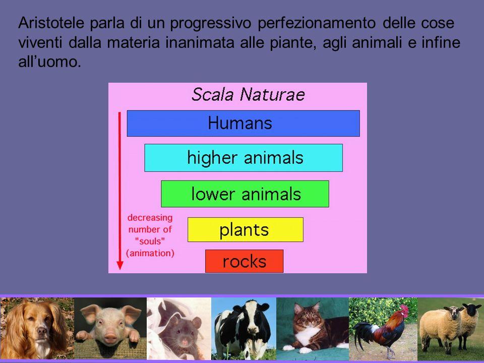 Corso di formazione per trasportatori di animali vivi direttiva CEE, n° 95/29 recepita dal Governo italiano con decreto del 20/10/1998, n° 388.