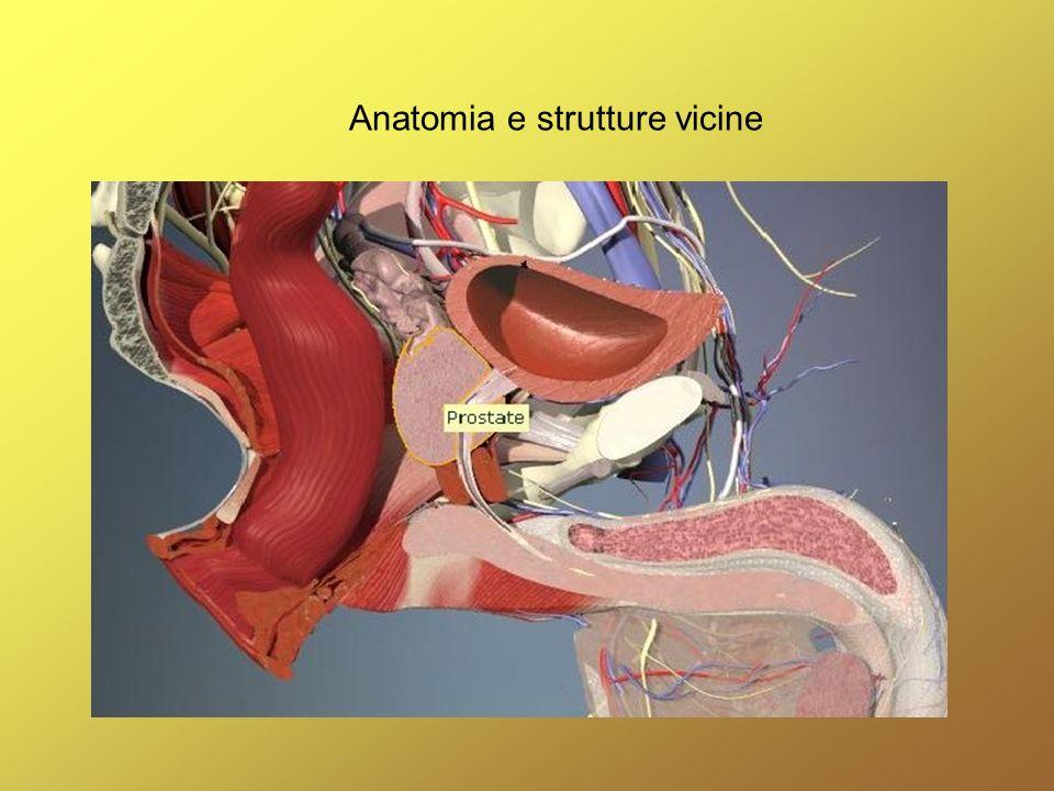 Anatomia e strutture vicine