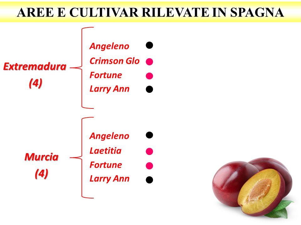 AREE E CULTIVAR RILEVATE IN SPAGNA Extremadura(4) Angeleno Crimson Glo Larry Ann Murcia(4) Fortune Angeleno Laetitia Larry Ann Fortune