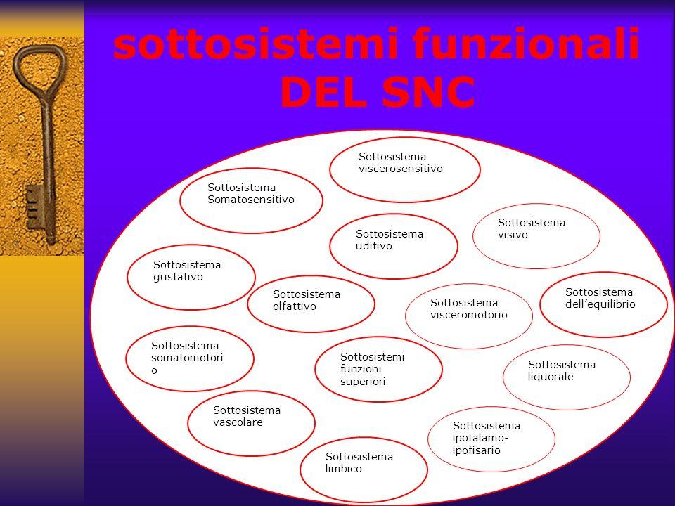 dott. Fulvio Forino sottosistemi funzionali DEL SNC Sottosistema viscerosensitivo Sottosistema visivo Sottosistema uditivo Sottosistema dellequilibrio