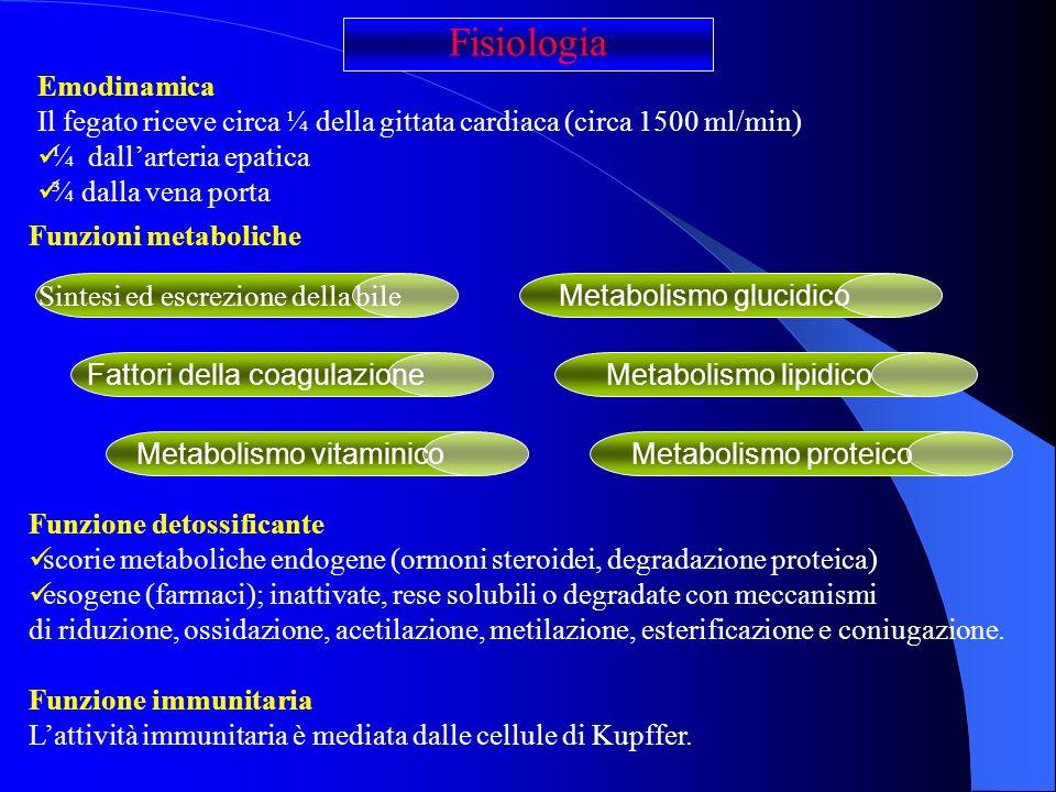 Emodinamica Il fegato riceve circa ¼ della gittata cardiaca (circa 1500 ml/min) ¼ dallarteria epatica ¾ dalla vena porta Fisiologia Funzione detossifi