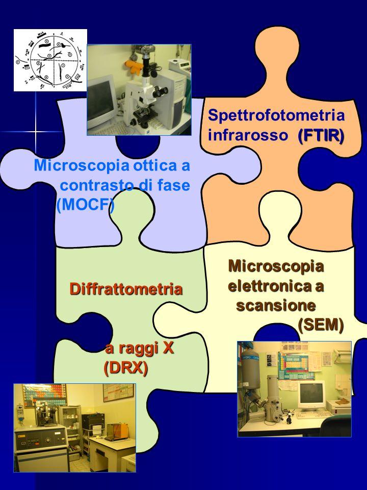 Microscopia ottica a contrasto di fase (MOCF) Microscopia elettronica a scansione (SEM) (SEM) Diffrattometria a raggi X a raggi X(DRX) (FTIR) Spettrof