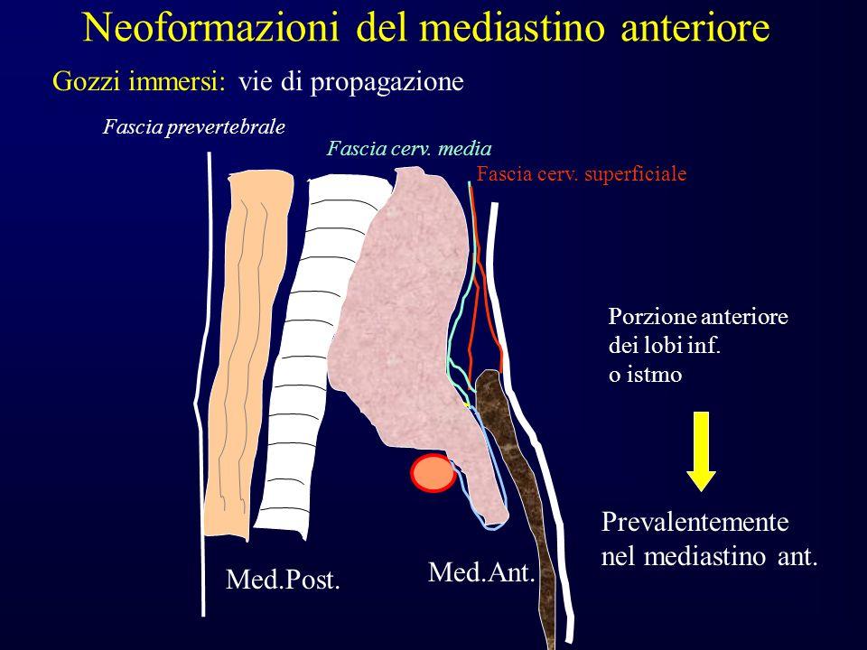 Med.Ant.Med.Post. Porzione anteriore dei lobi inf.
