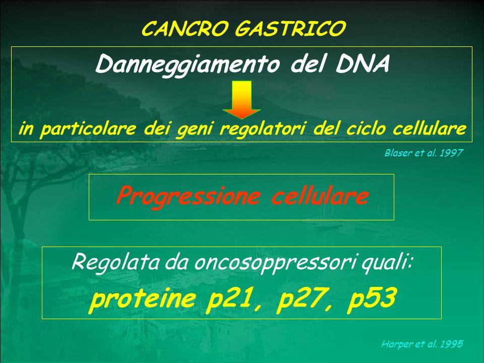 Proteina p53 contrastata con ematossilina ed immunoperossidasi: Strutture ghiandolari neoplastiche carcinomatose positive alla p53.