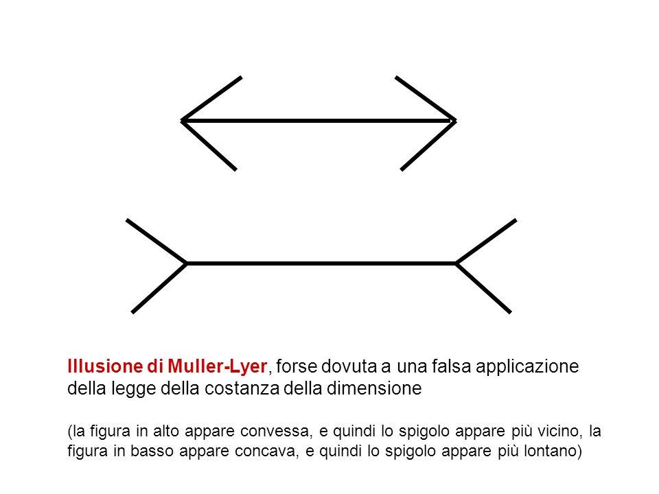 Illusione di Muller-Lyer, forse dovuta a una falsa applicazione della legge della costanza della dimensione (la figura in alto appare convessa, e quin