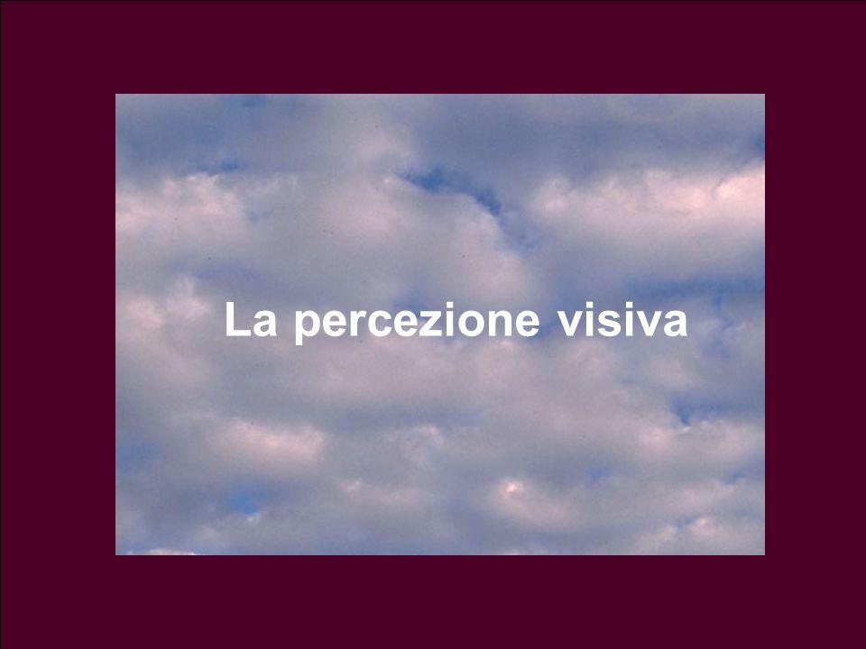 Esempio: percezione della luminosità Quanto chiaro e quanto scuro vediamo in una regione del campo visivo non dipende solo dallintensità dello stimolo fisico, ma anche dal contesto (contrasto)