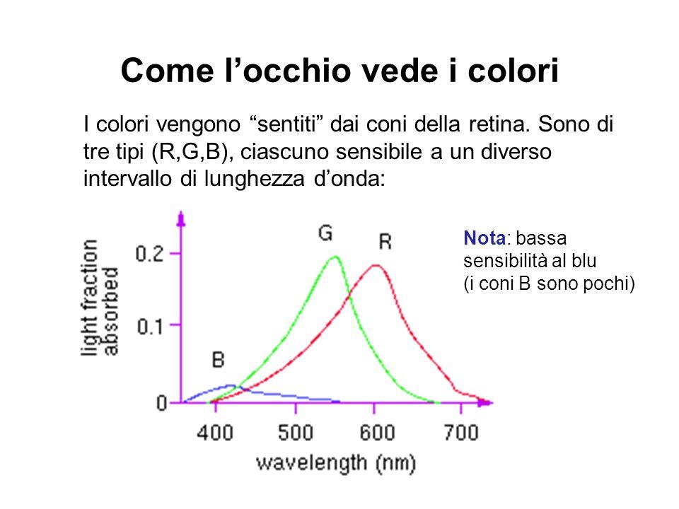 Come locchio vede i colori I colori vengono sentiti dai coni della retina. Sono di tre tipi (R,G,B), ciascuno sensibile a un diverso intervallo di lun