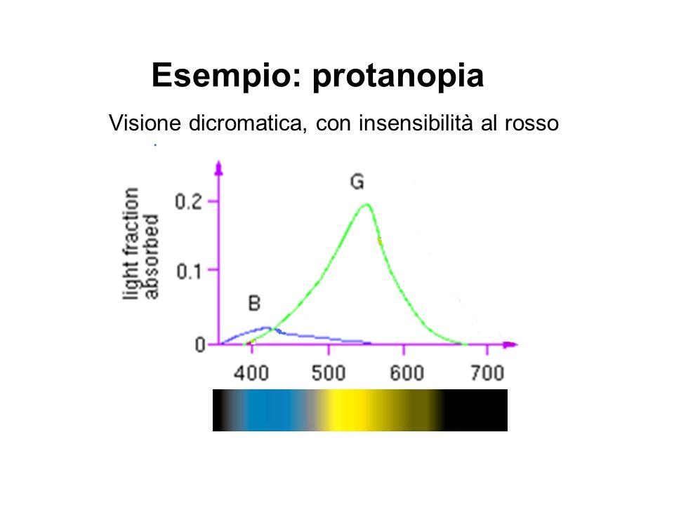 Esempio: protanopia Visione dicromatica, con insensibilità al rosso