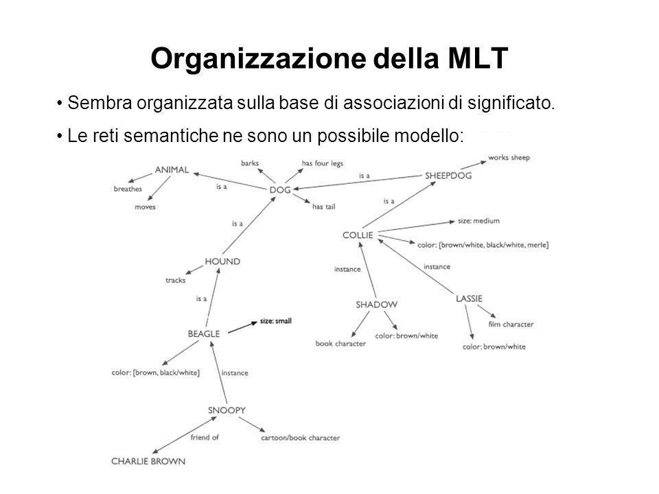 Organizzazione della MLT Sembra organizzata sulla base di associazioni di significato. Le reti semantiche ne sono un possibile modello: