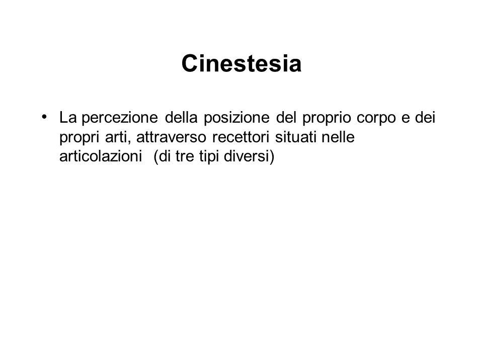Cinestesia La percezione della posizione del proprio corpo e dei propri arti, attraverso recettori situati nelle articolazioni (di tre tipi diversi)