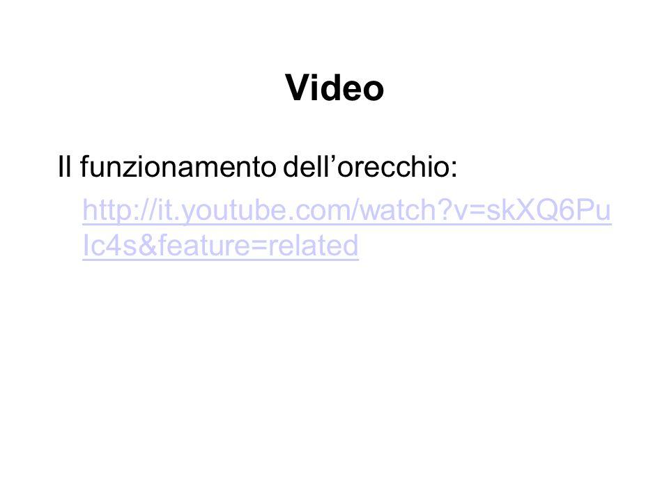 Video Il funzionamento dellorecchio: http://it.youtube.com/watch?v=skXQ6Pu Ic4s&feature=related