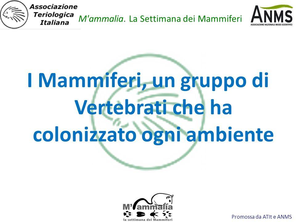 Promossa da ATIt e ANMS I Mammiferi, un gruppo di Vertebrati che ha colonizzato ogni ambiente M'ammalia. La Settimana dei Mammiferi