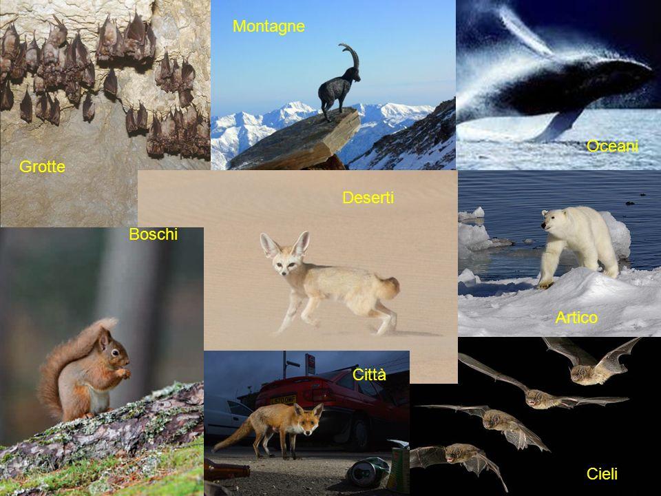 Promossa da ATIt e ANMSM'ammalia. La Settimana dei Mammiferi Grotte Montagne Deserti Oceani Artico Cieli Boschi Città