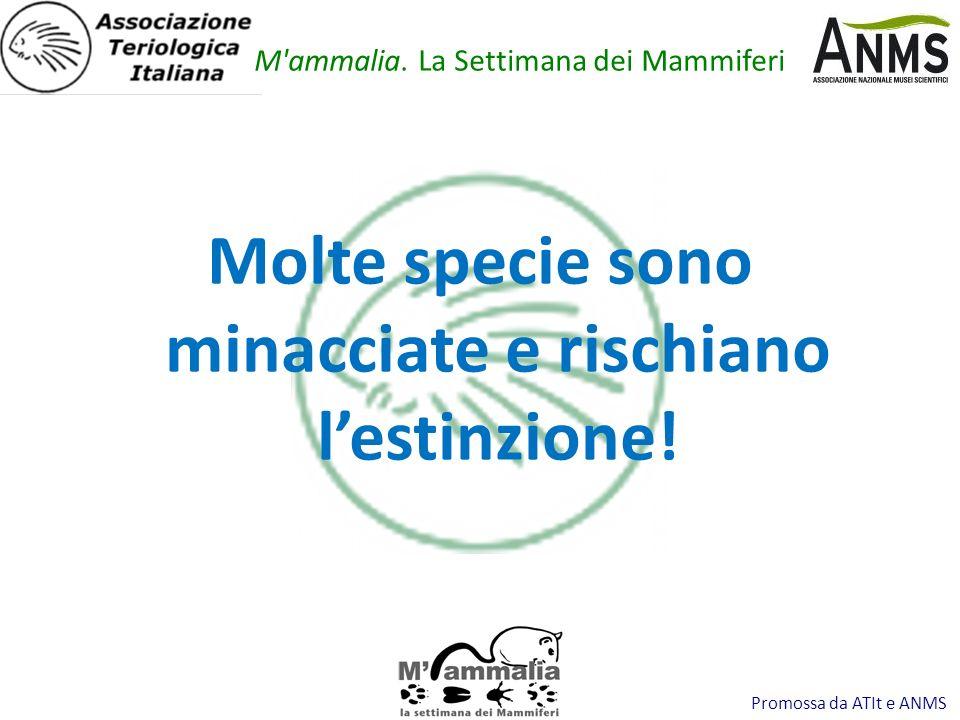 Promossa da ATIt e ANMS Molte specie sono minacciate e rischiano lestinzione.