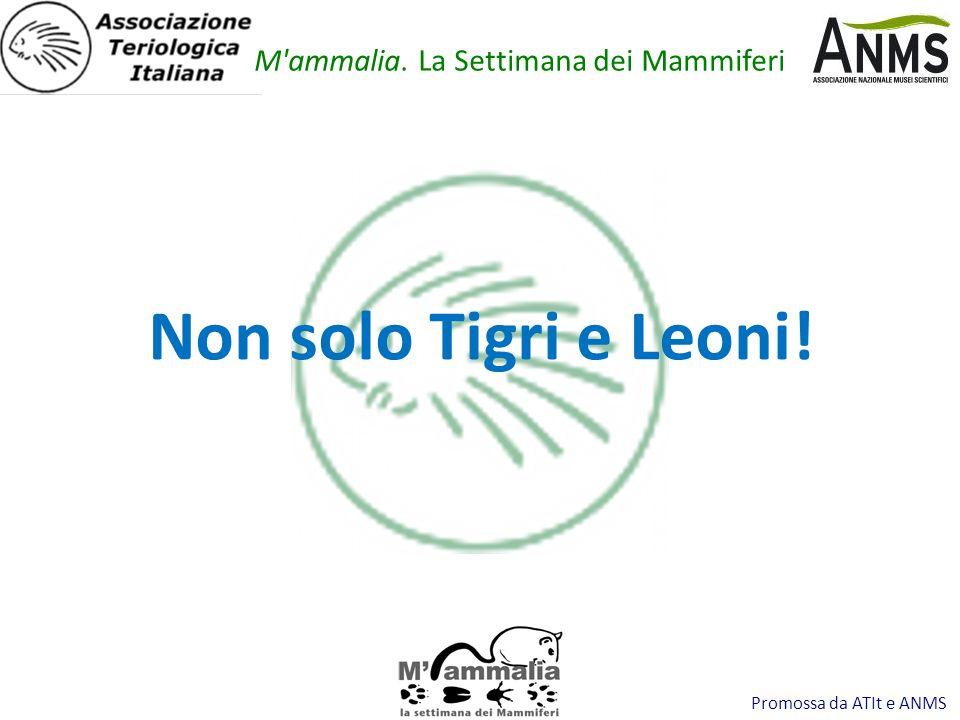 Promossa da ATIt e ANMS Non solo Tigri e Leoni! M'ammalia. La Settimana dei Mammiferi