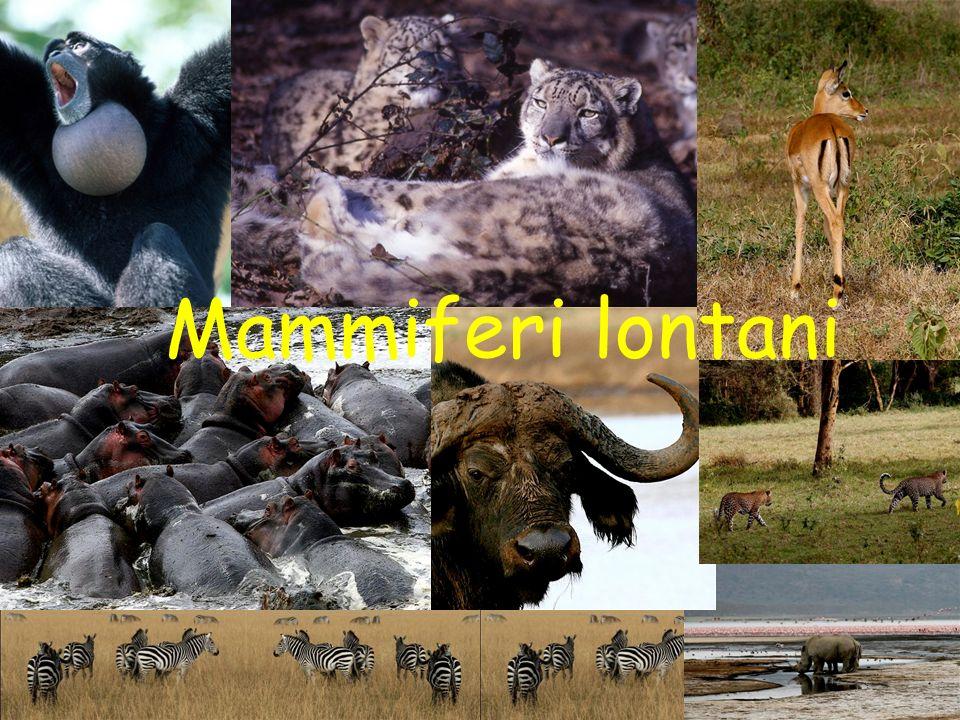 Promossa da ATIt e ANMSM ammalia. La Settimana dei Mammiferi Mammiferi lontani
