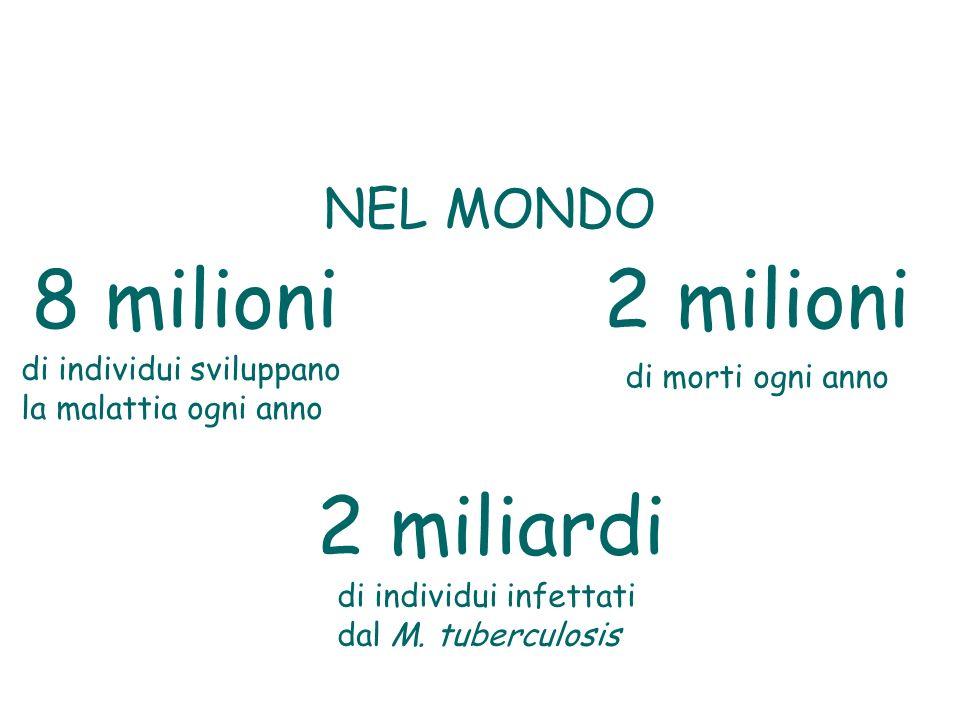 8 milioni2 milioni 2 miliardi di individui sviluppano la malattia ogni anno di morti ogni anno di individui infettati dal M. tuberculosis NEL MONDO