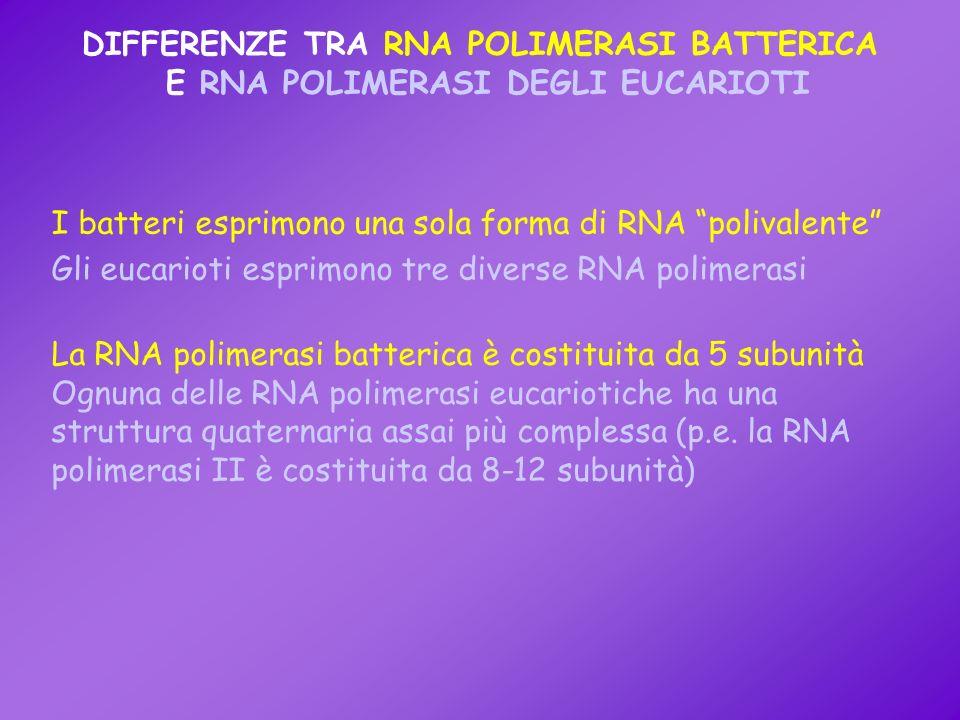 DIFFERENZE TRA RNA POLIMERASI BATTERICA E RNA POLIMERASI DEGLI EUCARIOTI I batteri esprimono una sola forma di RNA polivalente Gli eucarioti esprimono