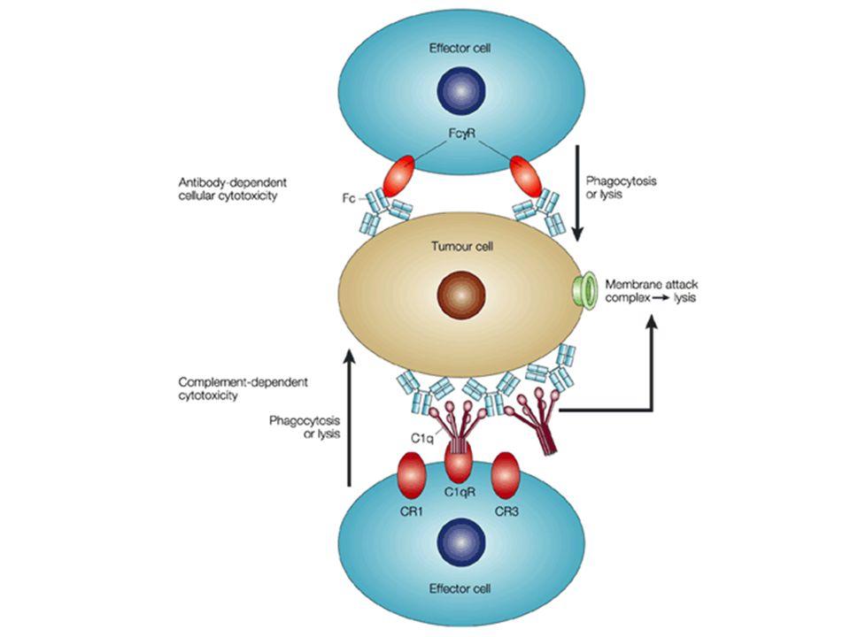 PRE-TARGETED RADIOIMMUNOTHERAPY Streptavidina Complessi biotina-chelante-radionuclide
