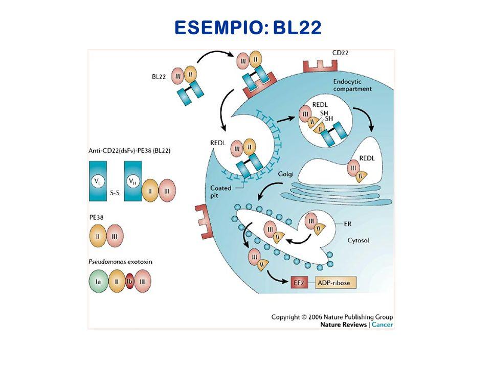 ESEMPIO: BL22