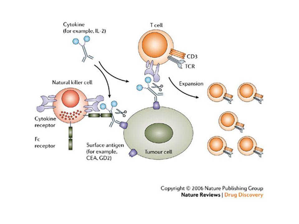 STRATEGIE PER LARMAMENTO DEGLI ANTICORPI IMMUNOCONIUGATI IMMUNOTOSSINE Uso di tossine a basso peso molecolare Uso di tossine proteiche IMMUNOCITOCHINE