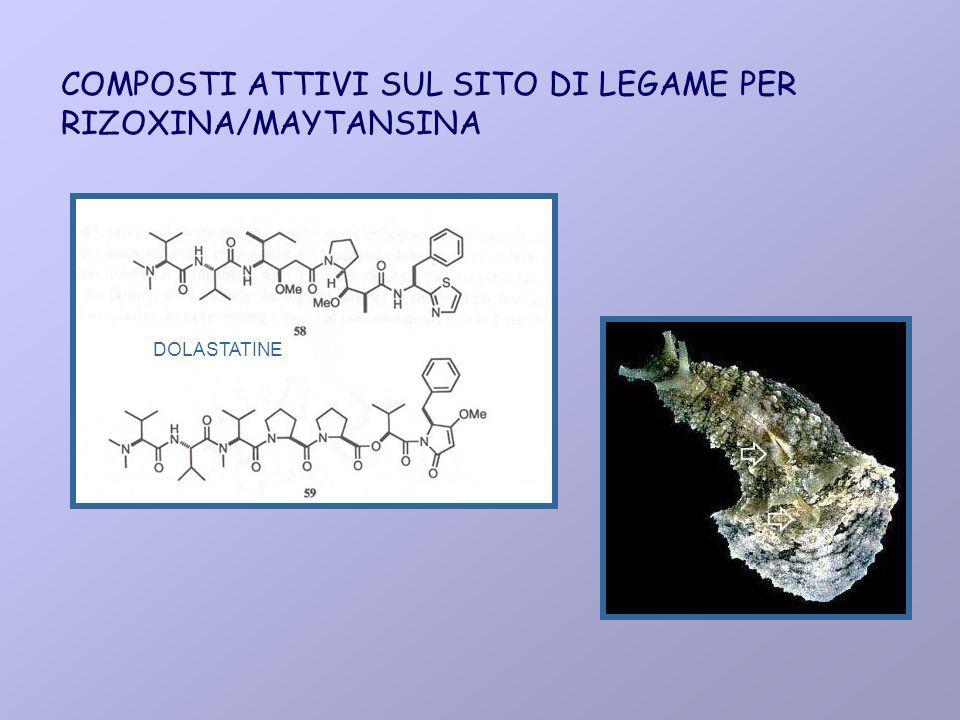 COMPOSTI ATTIVI SUL SITO DI LEGAME PER RIZOXINA/MAYTANSINA DOLASTATINE