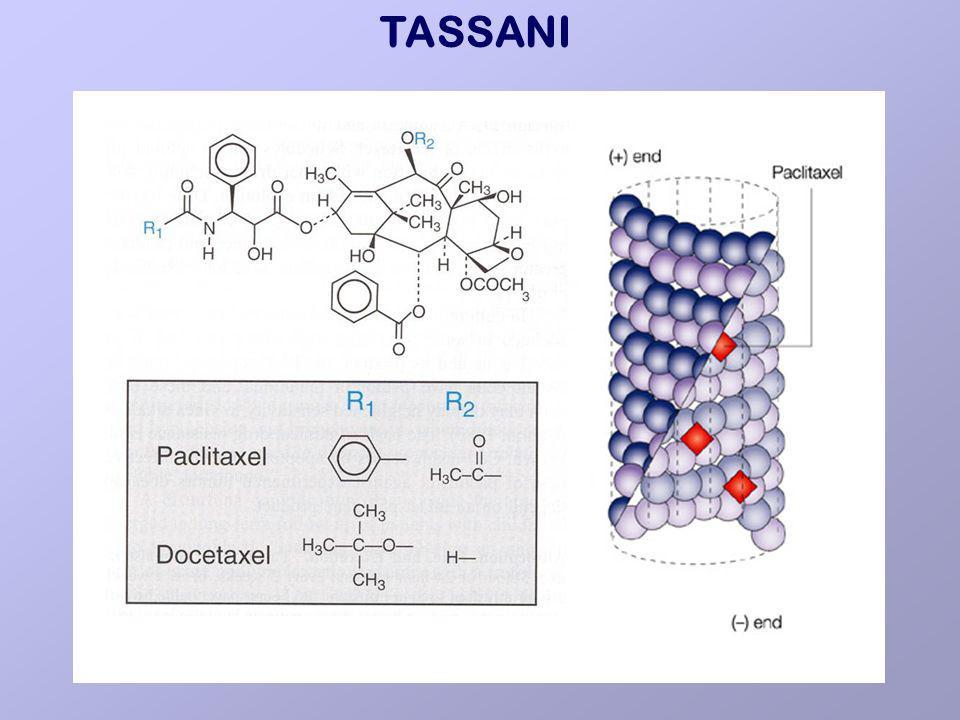 TASSANI