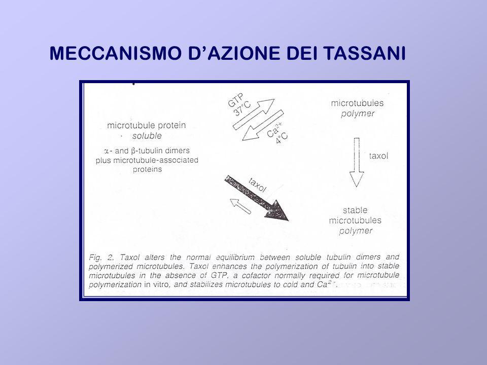 MECCANISMO DAZIONE DEI TASSANI