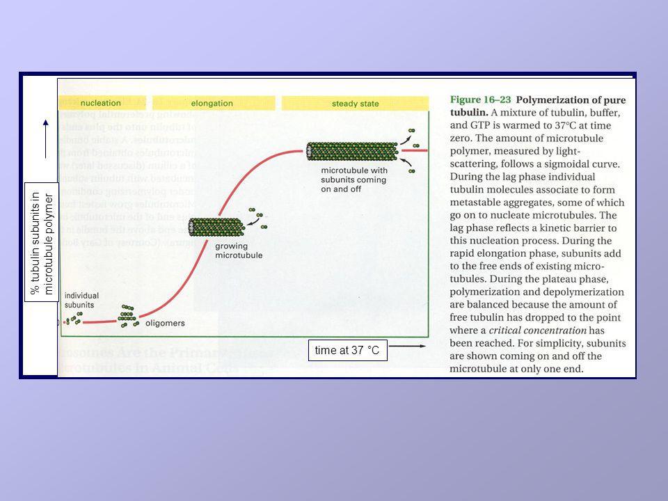 MECCANISMI DI RESISTENZA AGLI ALCALOIDI DELLA Vinca E AI TASSANI alterazioni a carico di - e/o -tubulina produzione di forme di -tubulina che presentano alterazioni a livello del sito di legame per i farmaci produzione di forme di - e/o -tubulina con alterazioni a livello dei siti di legame per il GTP alterazioni dellaccumulo intracellulare overespressione di P-glicoproteina overespressione di MRP-1 (a.