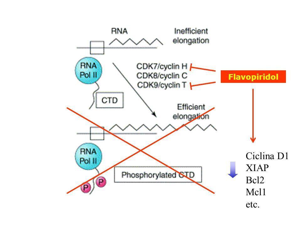Flavopiridol Ciclina D1 XIAP Bcl2 Mcl1 etc.