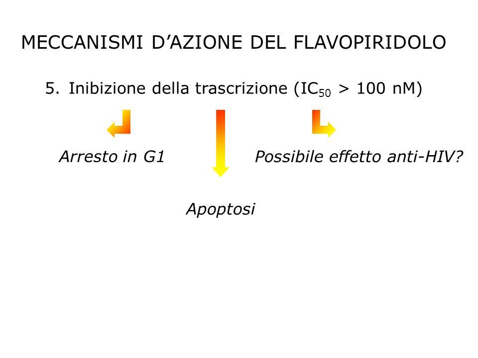 5.Inibizione della trascrizione (IC 50 > 100 nM) MECCANISMI DAZIONE DEL FLAVOPIRIDOLO Possibile effetto anti-HIV? Arresto in G1 Apoptosi