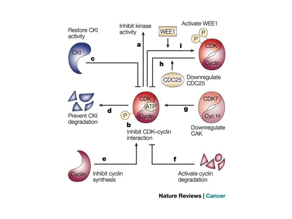 5.Inibizione della trascrizione (IC 50 > 100 nM) MECCANISMI DAZIONE DEL FLAVOPIRIDOLO Possibile effetto anti-HIV.