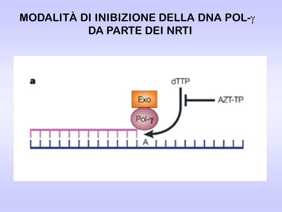 MODALITÀ DI INIBIZIONE DELLA DNA POL- DA PARTE DEI NRTI