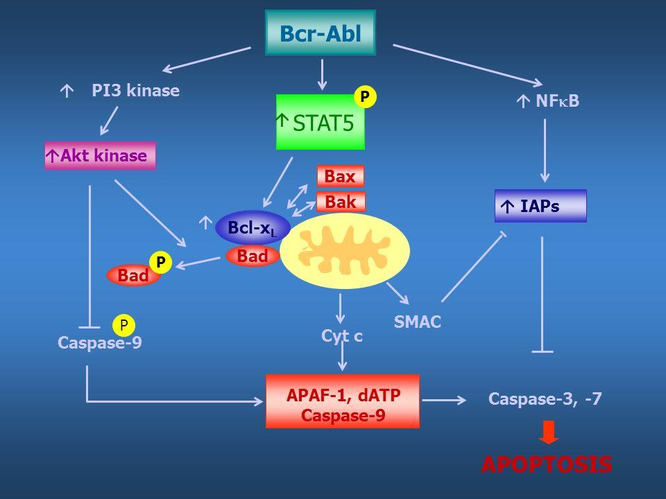 PI3 kinase STAT5 NF B Akt kinase Bcl-x L Bad Bax Bak P P Caspase-3, -7 Cyt c SMAC IAPs Caspase-9 APAF-1, dATP Caspase-9 APOPTOSIS Bad P Bcr-Abl