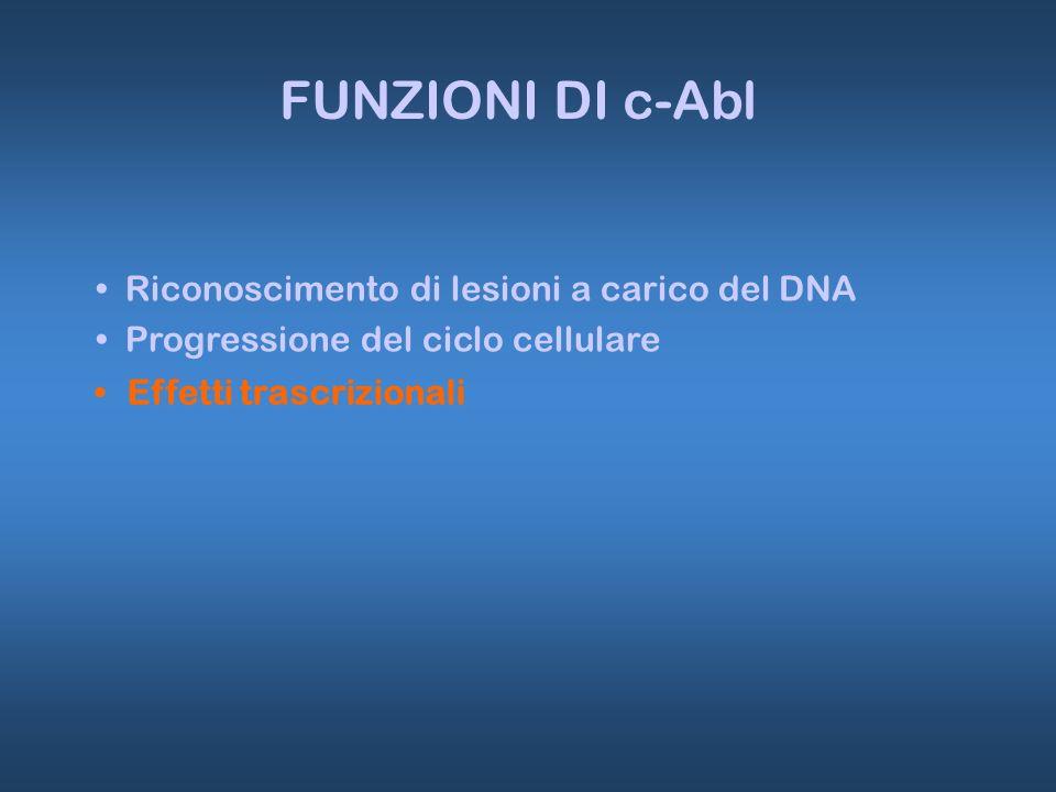 Effetti trascrizionali FUNZIONI DI c-Abl Riconoscimento di lesioni a carico del DNA Progressione del ciclo cellulare
