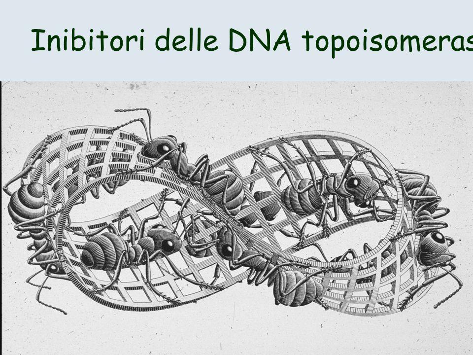 Inibitori delle DNA topoisomerasi