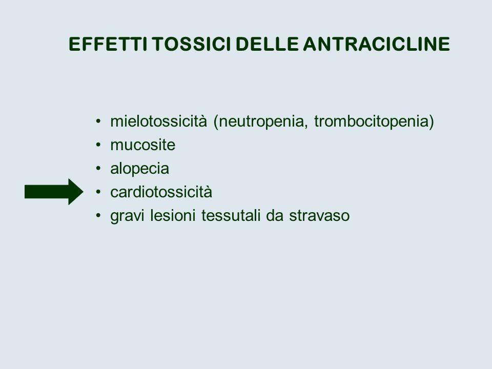 EFFETTI TOSSICI DELLE ANTRACICLINE mielotossicità (neutropenia, trombocitopenia) mucosite alopecia cardiotossicità gravi lesioni tessutali da stravaso