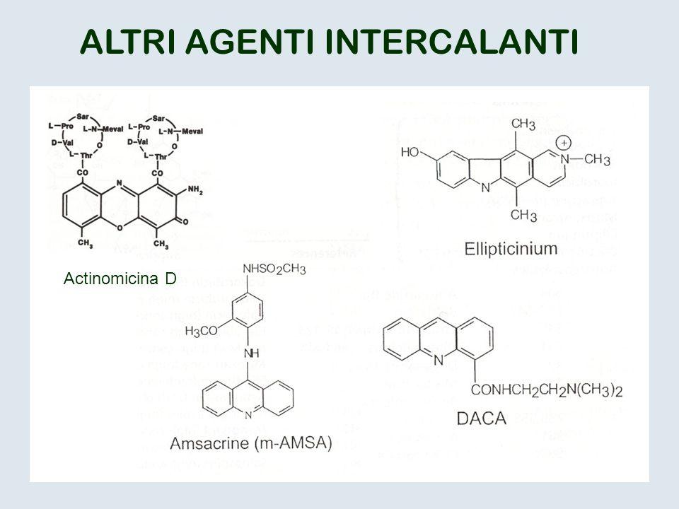 ALTRI AGENTI INTERCALANTI Actinomicina D