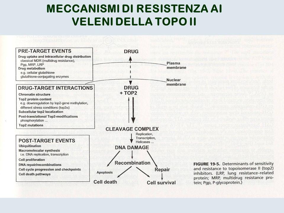 MECCANISMI DI RESISTENZA AI VELENI DELLA TOPO II