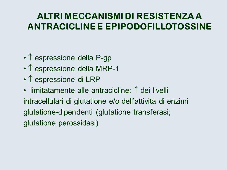 ALTRI MECCANISMI DI RESISTENZA A ANTRACICLINE E EPIPODOFILLOTOSSINE espressione della P-gp espressione della MRP-1 espressione di LRP limitatamente al