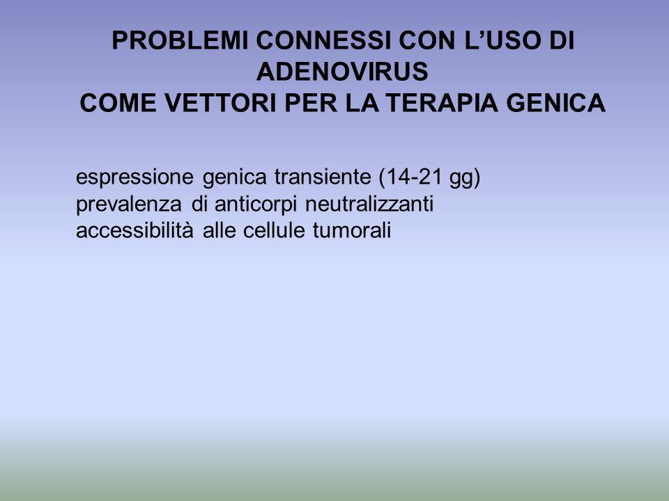 PROBLEMI CONNESSI CON LUSO DI ADENOVIRUS COME VETTORI PER LA TERAPIA GENICA espressione genica transiente (14-21 gg) prevalenza di anticorpi neutraliz