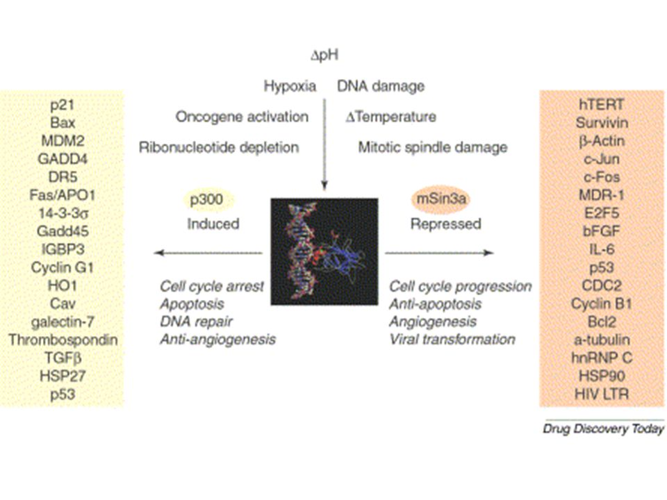 STRATEGIE TERAPEUTICHE BASATE SU p53 inibizione dellespressione di Mdm2 inibizione della funzione di Mdm2 TUMORI CHE PRESENTANO p53 wildtype attivazione della risposta di p53 blocco dellespressione di E6
