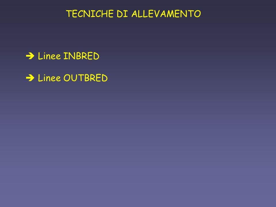 TECNICHE DI ALLEVAMENTO è Linee OUTBRED è Linee INBRED