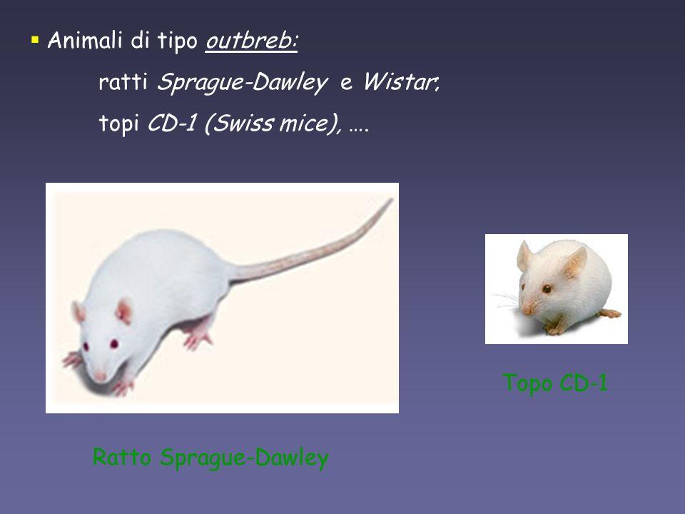 Animali di tipo outbreb: ratti Sprague-Dawley e Wistar; topi CD-1 (Swiss mice), …. Topo CD-1 Ratto Sprague-Dawley