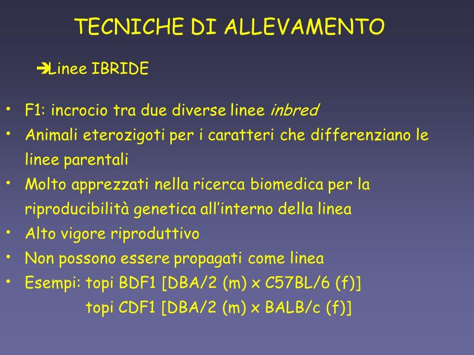 TECNICHE DI ALLEVAMENTO F1: incrocio tra due diverse linee inbred Animali eterozigoti per i caratteri che differenziano le linee parentali Molto appre