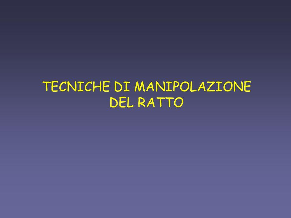 TECNICHE DI MANIPOLAZIONE DEL RATTO