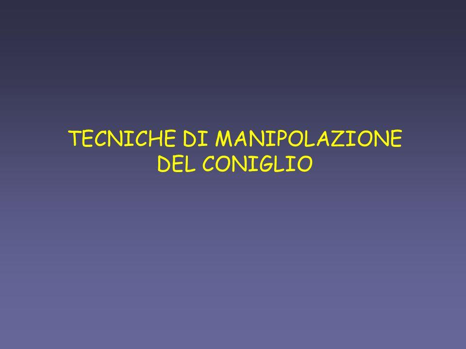 TECNICHE DI MANIPOLAZIONE DEL CONIGLIO