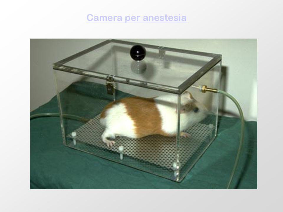 Camera per anestesia